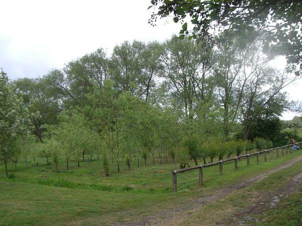 Millennium Site in Summer